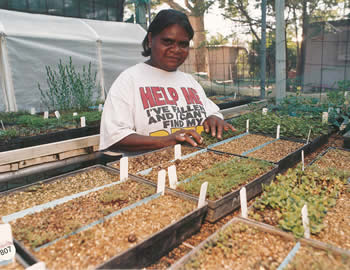 Indigenous women tending to plants during the 1990s