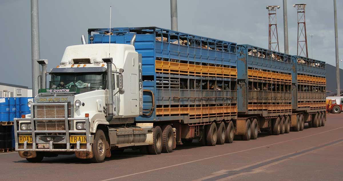 Road train full of cattle on wharf